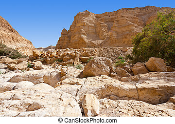 Wilderness - Dry Riverbed in the Judean Desert
