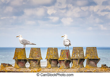 Two seagulls on the pier