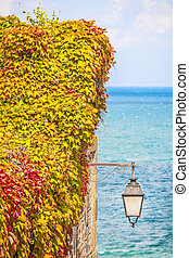 Wild vines leaves on a wall with a lamp - Wild colorful...