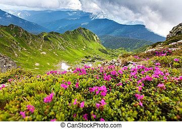 Carpathian mountains - Image of a beautiful carpathian...