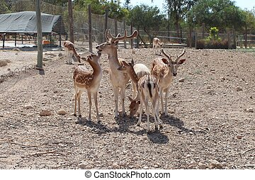 The family of seven sika deer In the aviary