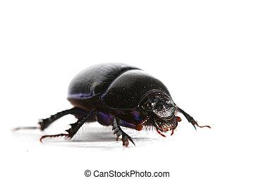 isolated bug on white background close up