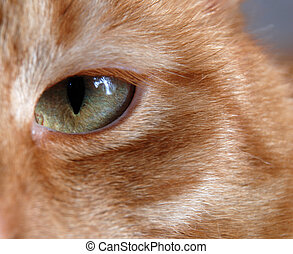 Cat eye - Close-up on a cat eye