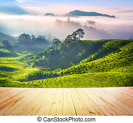 Tea Plantations - Wood floor over tea Plantations at Cameron...