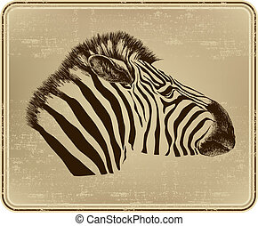 Animal zebra, vector illustration