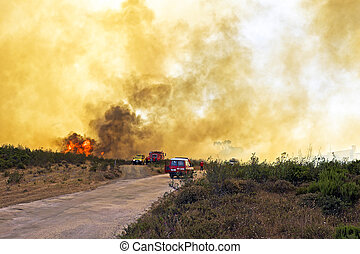 Huge forest fire threatens national park at the westcoast in...