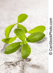 Stevia - Stevia leaves isolated on bright stone background...