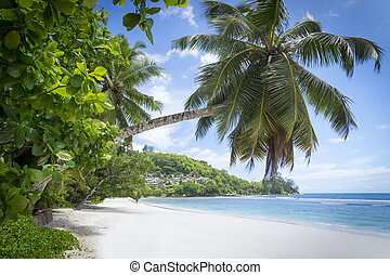 White coral beach sand and azure indian ocean. - Mahe...
