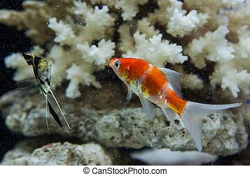 Acuario, coral, arrecife