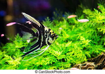 A green beautiful planted tropical freshwater aquarium with...