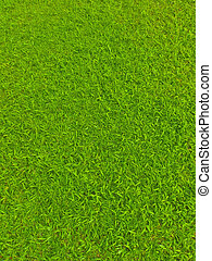 Green football field grass