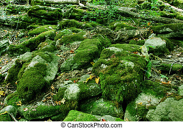 Rainforest - Moss covered wet rocks in a tropical rainforest