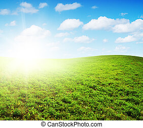 Green field under midday sun. Rural scene.