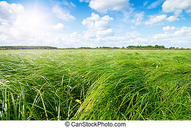 Green grass field and forest under midday sun on blue sky -...