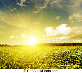 Gold sunset in green grass field. Belarus. Deciduous forest...
