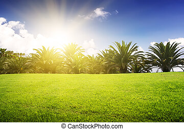 Green field and tropical palm