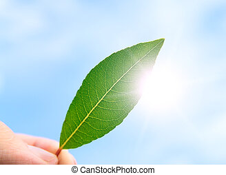 The person holds in a hand a leaf - The person holds in a...