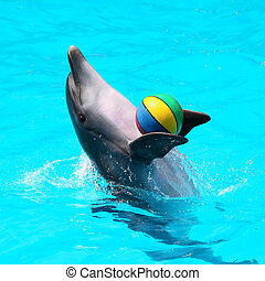dolphins playing in the blue water with balls