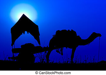 Silhouette camel at sunset in India . - Silhouette camel at...