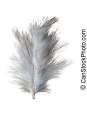 White feather isolated on white background