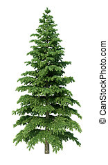 fir tree without environment and shadow