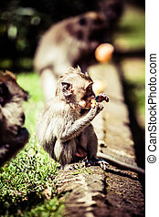 Monkey family at sacred monkey forest Ubud Bali Indonesia