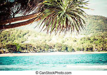 Tropical sandy beach with palm trees at sunny day. Lombok -...