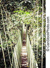 Suspension bridge to mangrove tropical forest.
