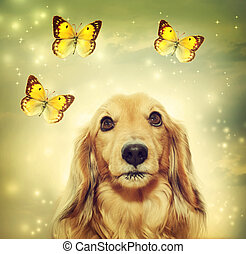 Dachshund dog with butterflies - Dachshund dog with yellow...