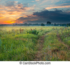 Meadow at sunset - Landscape, meadow at sunset