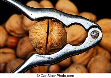 Walnut in a nutcracker. - Walnut in a nutcracker with a...