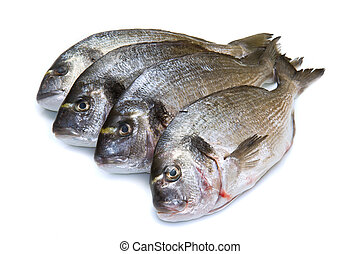 group of sea bream isolated on white