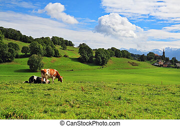 Pastorale in Provence, France. Green meadow with lush grass...