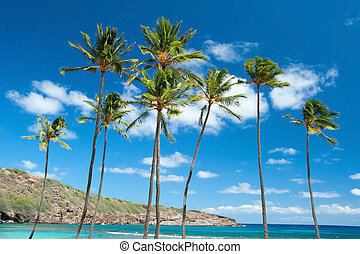 Palm trees with azure blue sky with clouds in background