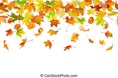 Seamless autumn leaves - Seamless pattern of autumn leaves,...