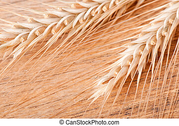 ear of wheat on a background of wood