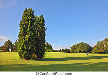 A large cypress trees in park Sigurta