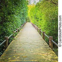 A walk way among a mangrove forest - A walk way among a man...