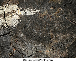 background made of old wooden stump