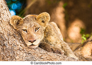 Cute Lion Cub resting at the base of a tree trunk