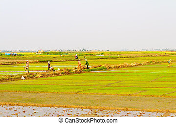 women farmers bring water to the rice fields