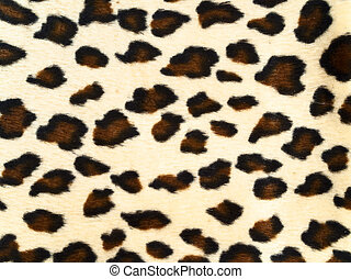 leopard background - photo of the spotted leopard background