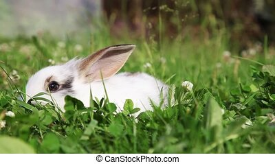 White bunny in a grass - White bunny sitting in a grass,...