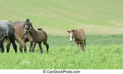 warmblood mares and foals on meadow - warmblood mares and...