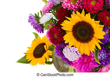 aster and sunflowers close up  isolated on white background