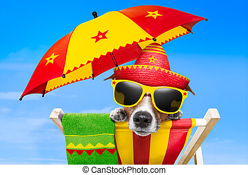 mexican dog on vacation relaxing on a deck chair under an...