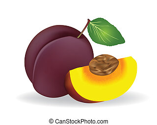 Plum - vector illustration .  Plum on white background