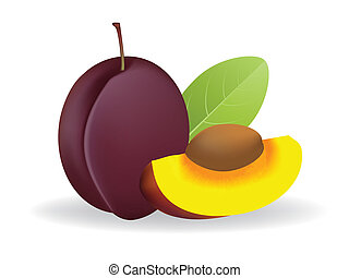 Prunes - vector illustration .  Prunes on white background