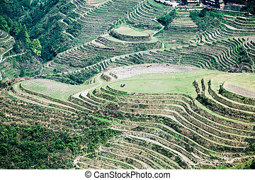overlooking the terraced fields in longsheng county,guangxi...