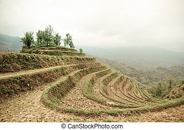 terraces with cloud and mist